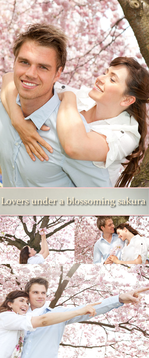 Stock Photo: Lovers under a blossoming sakura
