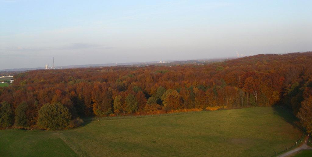 Herbstwald in der Nähe von Dortmund