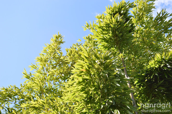 Bamboo Leaves and Blue Skies