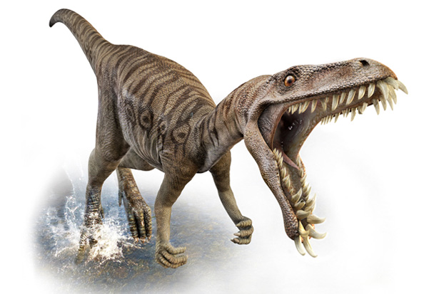 Tuatara Or Sphenodon Are Thought To Date Back Over 200 Million Years And Predate Dinosaurs Mother Nature Surprises Us When Huge Have Died Out