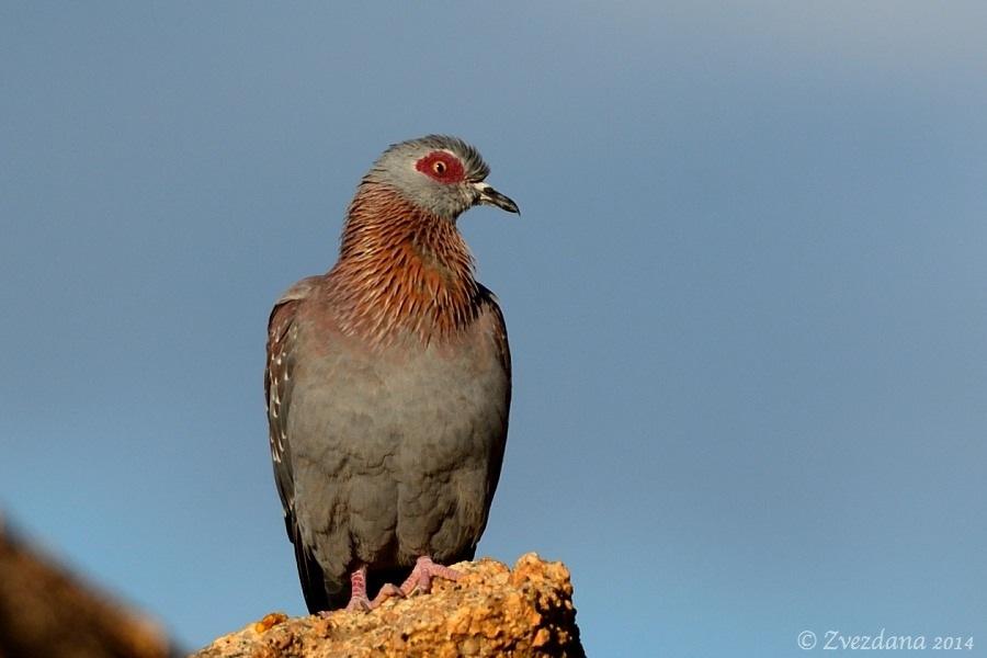 Namibia+2014_043.JPG
