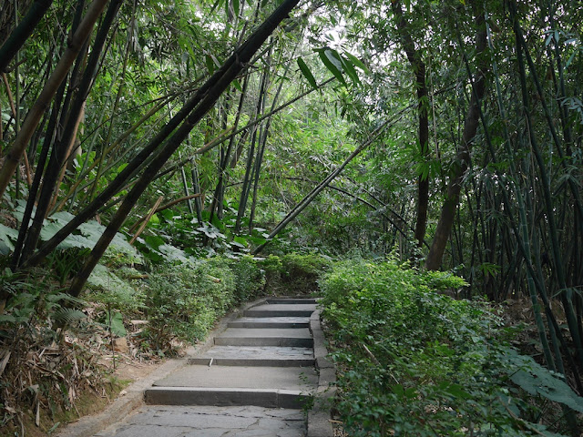 steps going up a hill with much greenery including bamboo