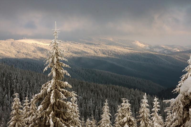 Lăcăuți Covasna zăpadă schi brazi