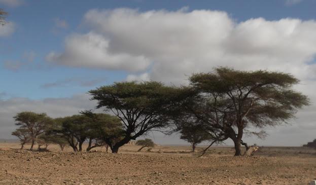 Marrocos e Mauritãnia a Queimar Pneu e Gasolina - Página 9 DSCF1052