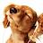 Jill Hewitt avatar image