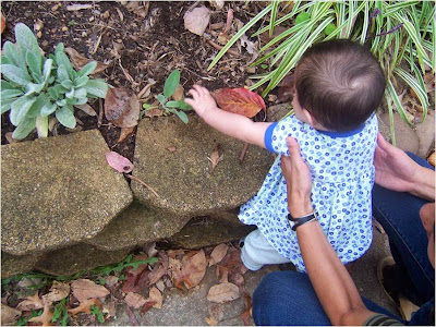 Child is held by adult while exploring a tree leaf.