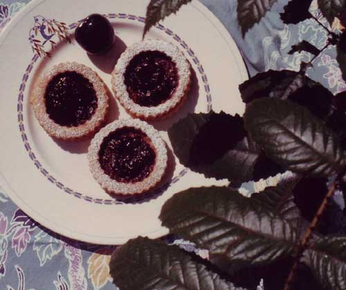 Blog Archive with Davidson Plum rings (Davidson pruriens)