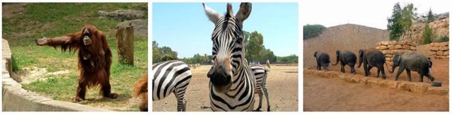 Прекрасные зоопарки (слева и в центре - Сафари, Рамат Ган; справа - Библейский зоопарк, Иерусалим). Гид в Израиле Светлана Фиалкова.