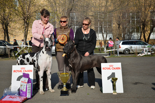Кубок Аризоны-14(ПК)+ЧРКФ, Красноярск, 27 апреля 2014 DSC_6164