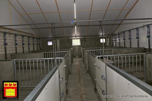 Open dag varkensbedrijf molenpas overloon 29-06-2013 (5).JPG