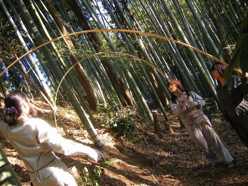 私たちの作品は竹を細かく裂いてアーチ状にしならせたものを組み合わせています。その隙間から竹の葉が織りなすやわらかなこもれびを感じてもらうのが目的です。 baec4beafaae