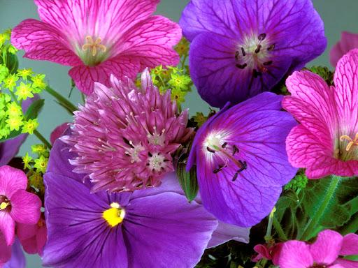 Flowers_desktop_wallpapers.jpg