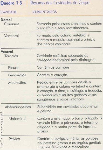 Anatomia do pelo humano