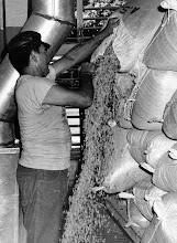 Fotos historicas del proceso del cafe en la Hacienda Buena Vista.