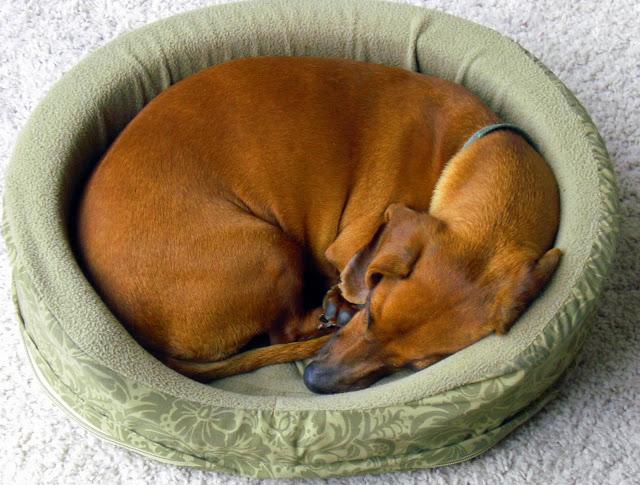 מיטה מבד לכלב