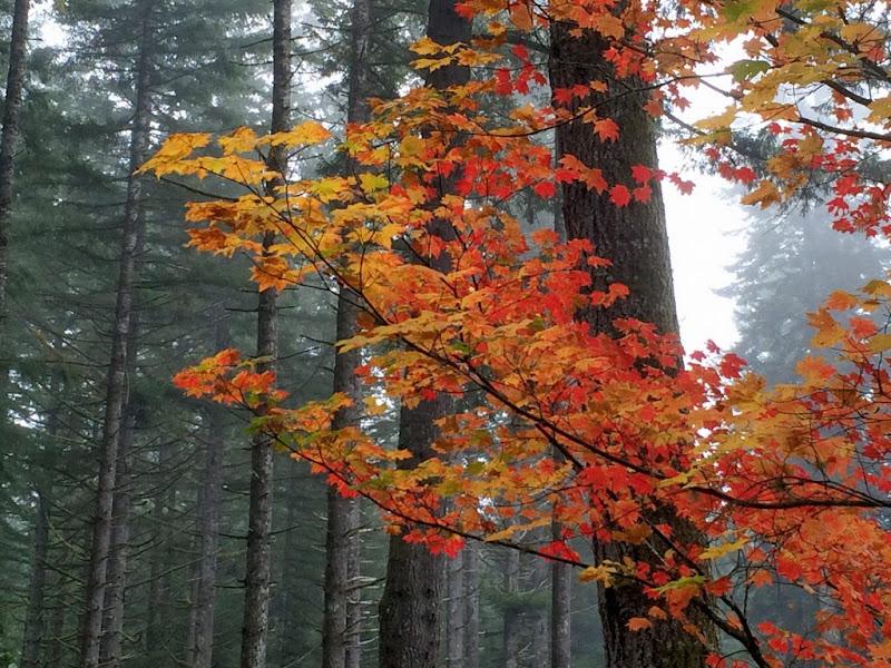 Mùa Thu Oregon