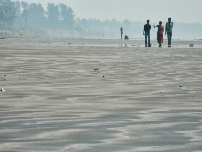 Heated sands of Arnala beach