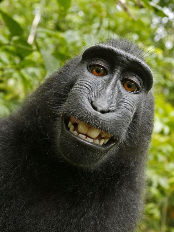 Macaco rouba câmera