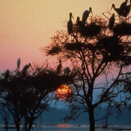 Amit Bhusari Photo 4