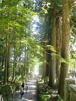 杉木立の参道