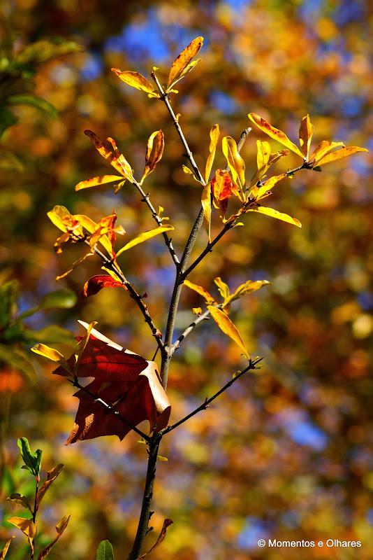 Saudades do Outono