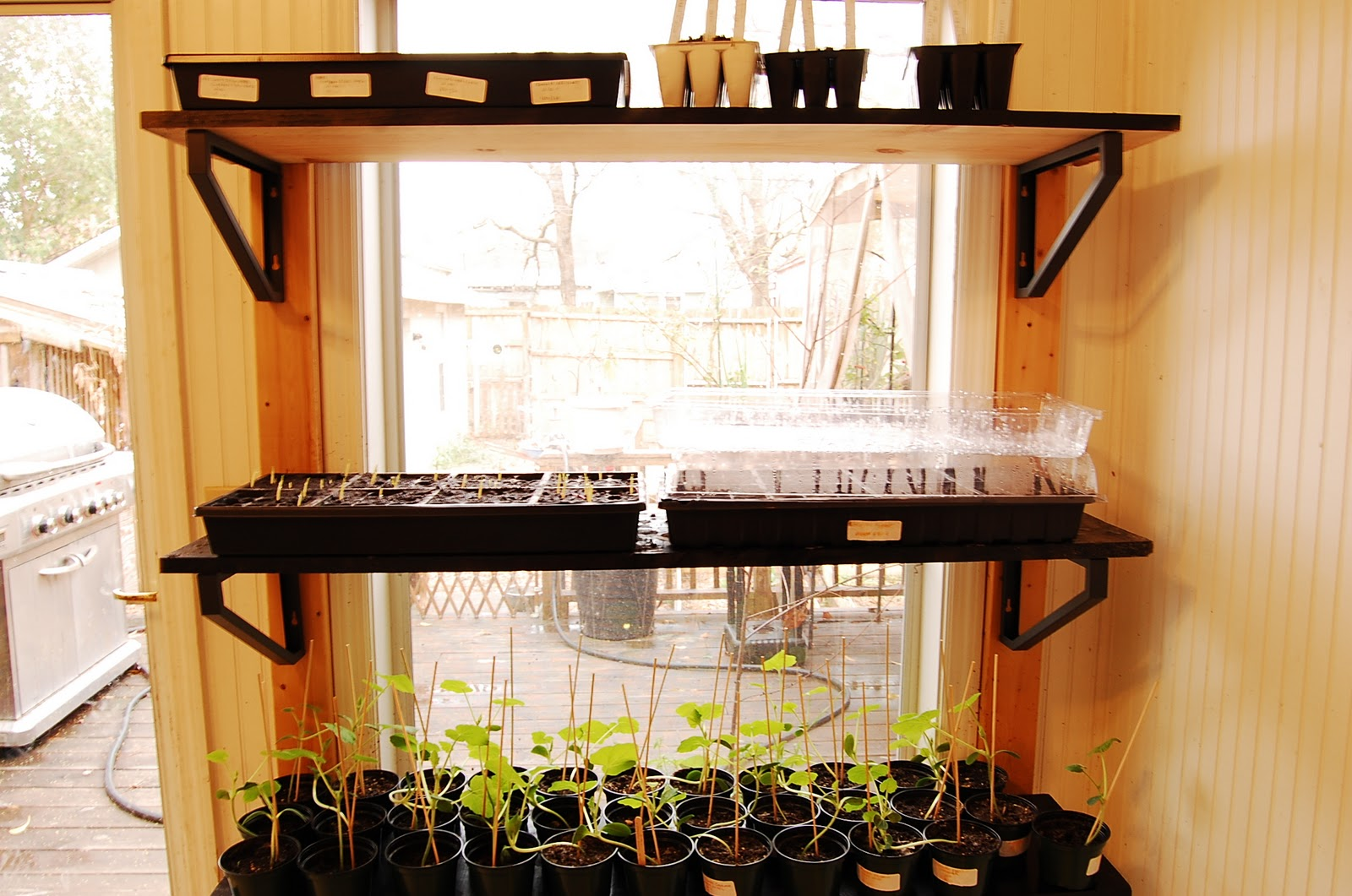 Urban Self Sufficientist Quick And Easy Window Shelves To Grow