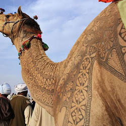 Arab artist with wool camels !