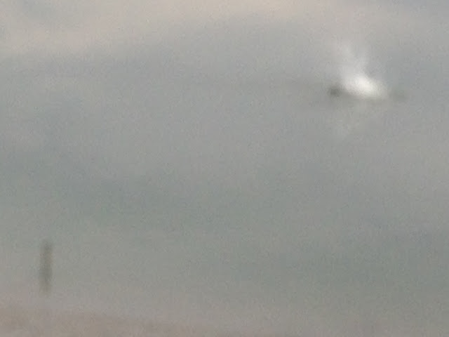 ミサゴ(猛禽類)竹馬川河口の魚ゲット-2