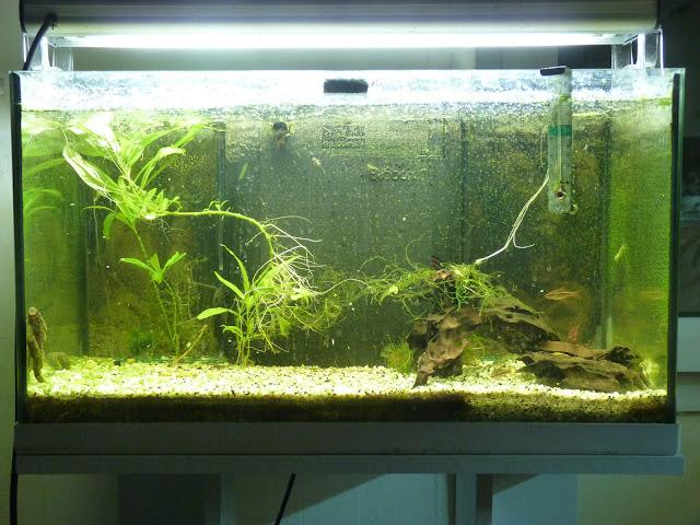 Ma petit histoire Aquariophile de 2009 à aujourd'hui  P1020566