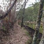 Alongside Middle Harbour Creek (124651)