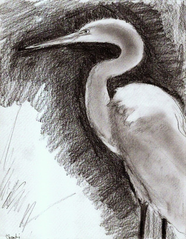 Level 1 Drawings Shonti's Egret Drawings Show