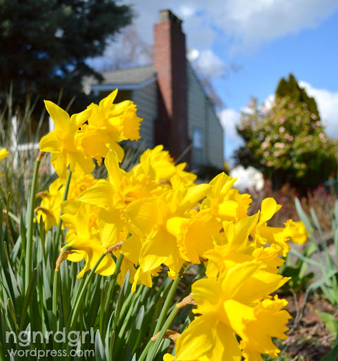 Daffodils and Blue Skies