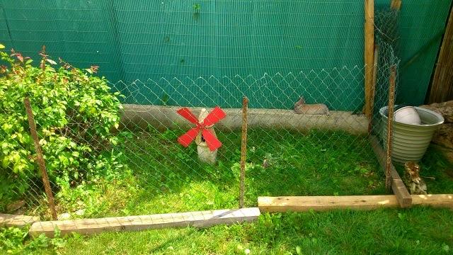 Griffe, petite lapine marrons- [adoptée] 962736DSC0127