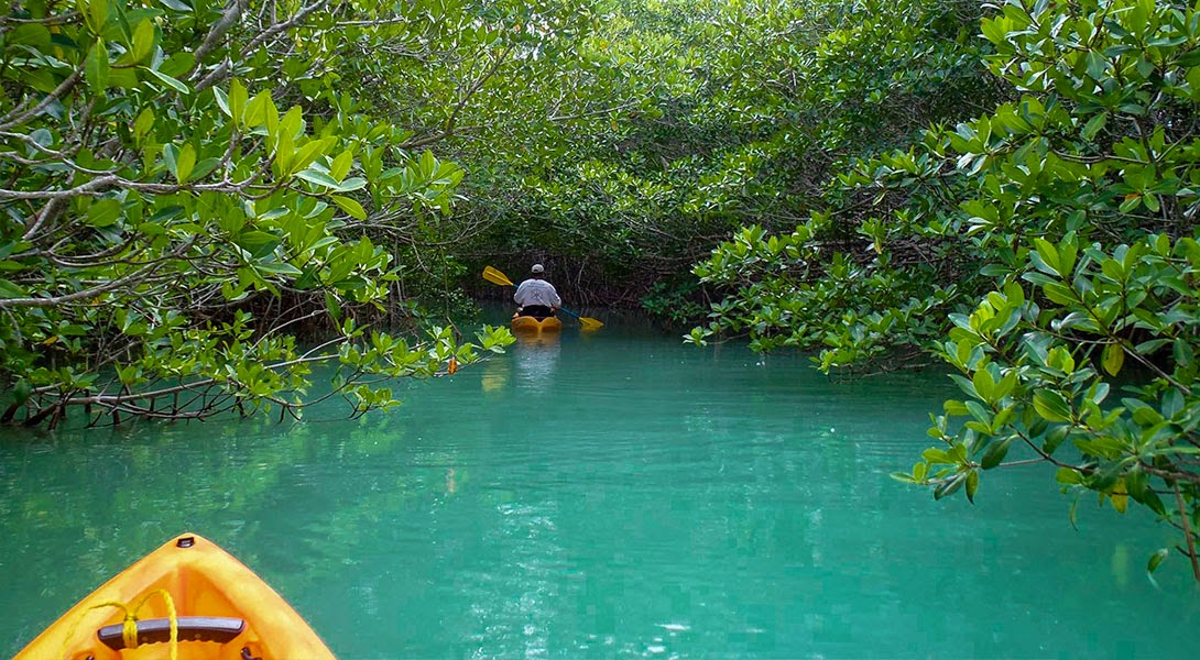 Key Largo Kayaking expeditions