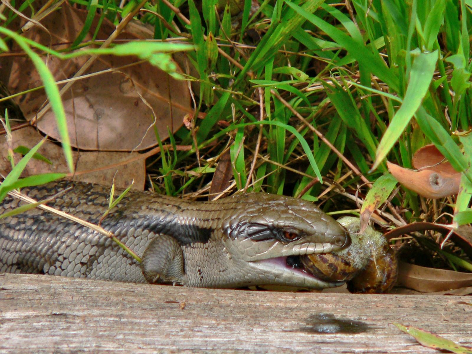 Animal Kingdom Reptiles