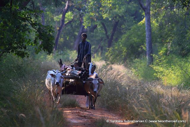 Locals of Tadoba Andhari Tiger Reserve