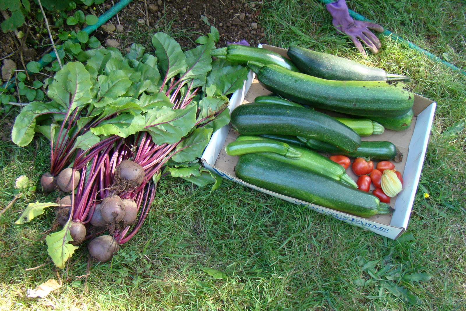 Brooks Hobby Farm: Beginner Gardeners