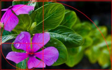 8 kỹ thuật chụp ảnh nên biết