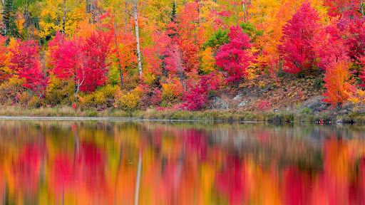Autumn Reflections, Gryphon Lake, Espanola, Ontario.jpg