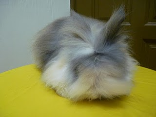 rabbit in the web rabbit 101 part 4