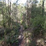 Riverside Walking Track (54809)