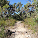 Track east of Kariong Brook (53192)