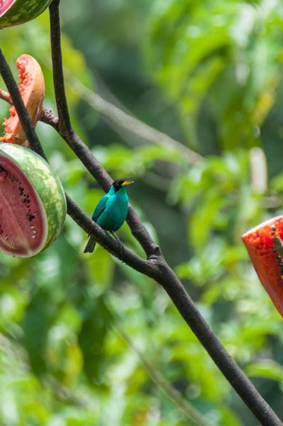 разновидность птиц фото и названия в россии