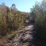 On the Willunga track (156355)