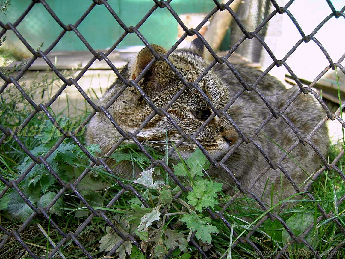 Дикая кошка в клетке зоопарка Санкт-Петербурга фото