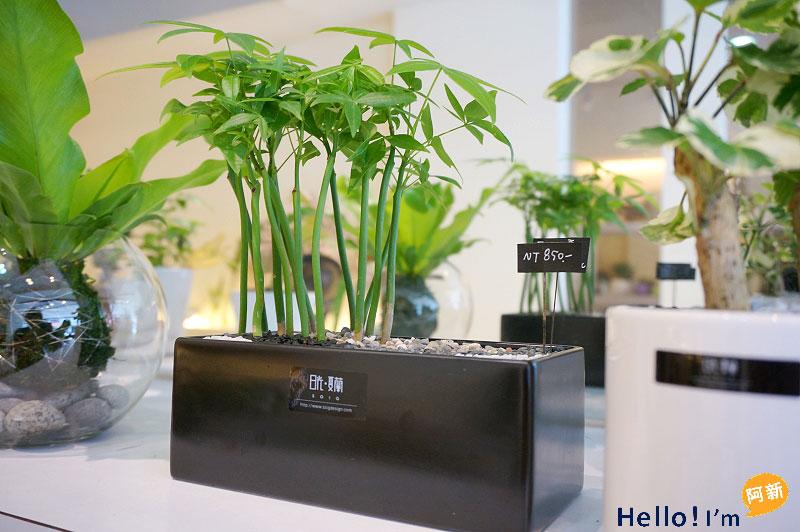 台南盆栽,日光夏蘭植物工房-5