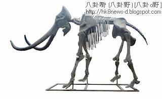 長毛象-長毛象Lyuba