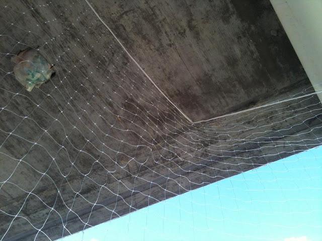 redes - Resumen de ideas para mosquiteras y redes ventanas y balcón para gatos. IMG_2658