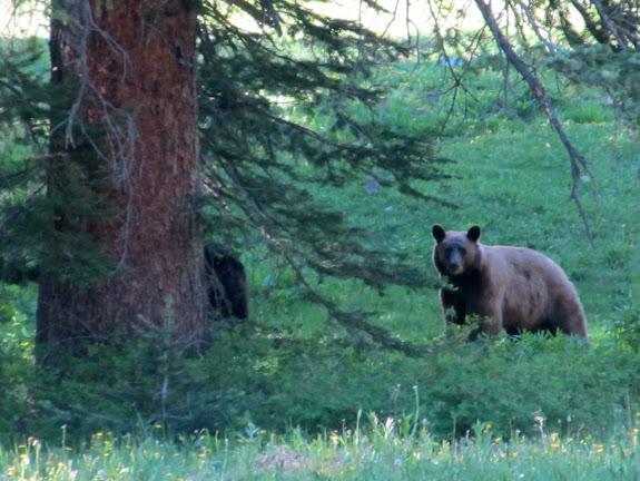 Mama bear staring us down!