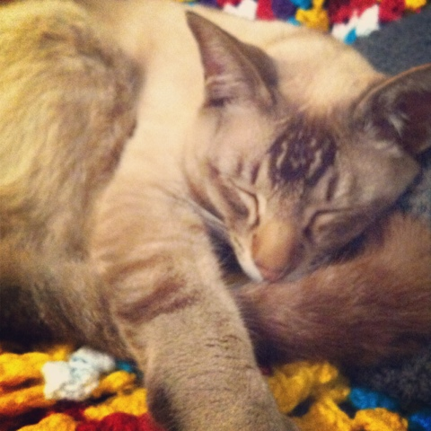 A sleek-looking cat asleep on a colourful crocheted blanket.